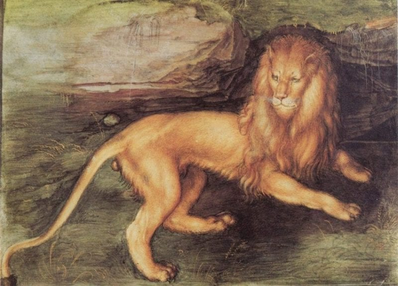Miniatura aguada de un León pintado por Alberto Durero
