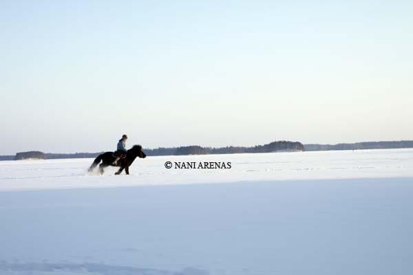 Caballo cabalgando sobre la nieve en Finlandia