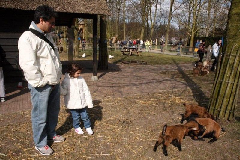 Area con animales en Keukenhof