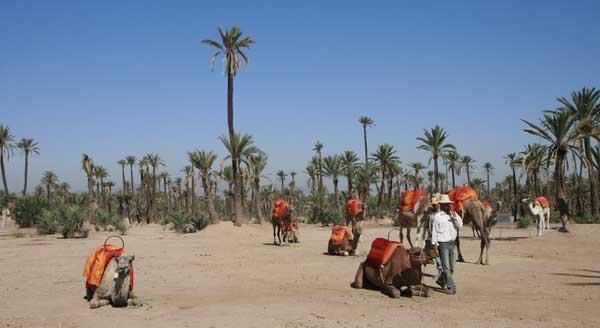 El palmeral de Marrakech es un vergel