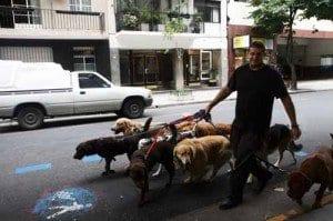 Buenos Aires pasea perros la Recoleta