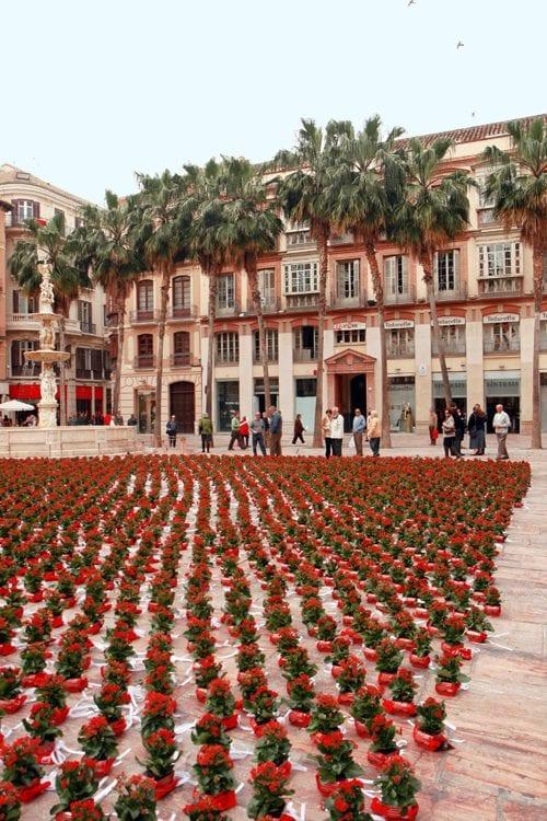 La Plaza de la Constitución de Málaga llena de flores