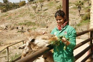en Selwo aventura se puede dar de comer a las jirafas