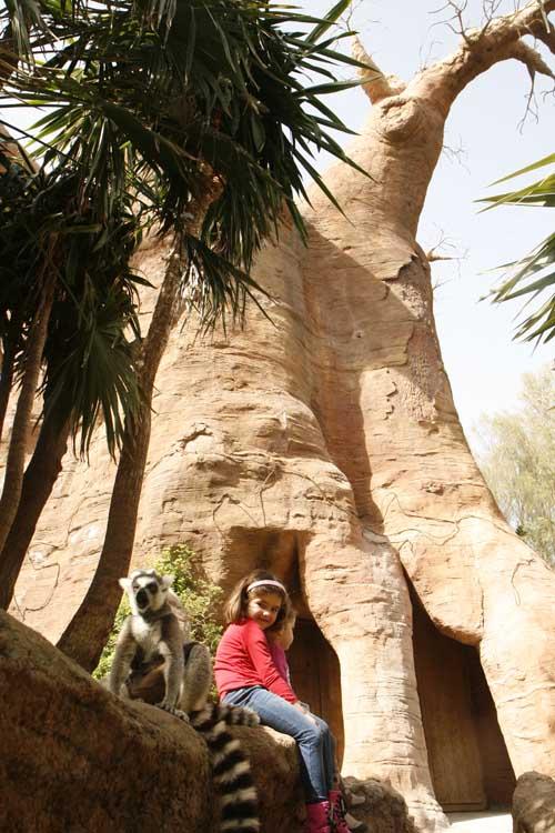 malaga bioparc baobab