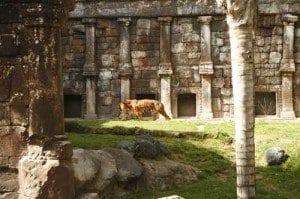 malaga bioparc tigre