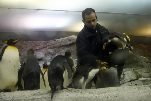 En Selwo Marina puedes ver pingüinos