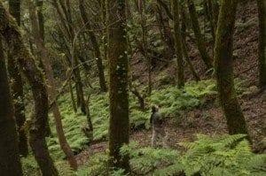 foto bosque de laurisilva en la gomera