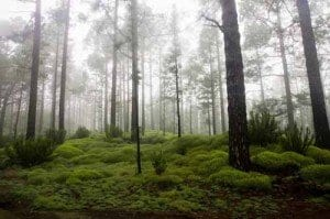 Tenerife paisaje verde la viajera blog