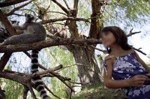 Valencia bioparc lemures blog