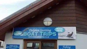 delfines en gales