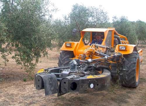 Jaén manostijeras