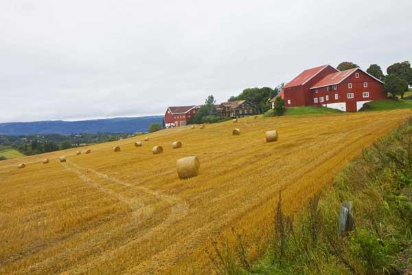 Granavollen ruta de San Olav otoño