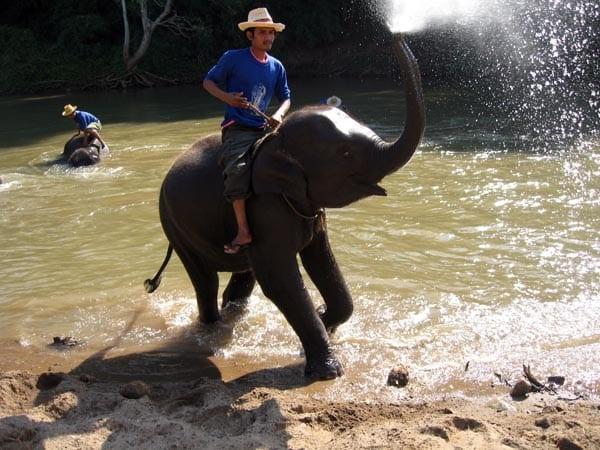 Tailandao elefante chorro horizontal Baja blog
