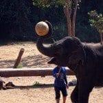 Paseo por el Chiang Mai, norte de Tailandia, en elefante