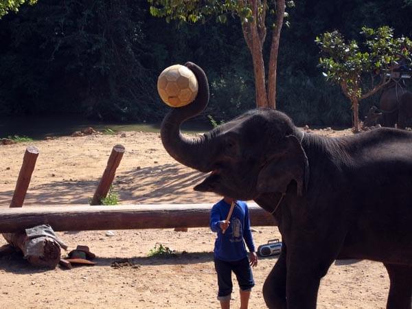 Elefente jugando a la pelota