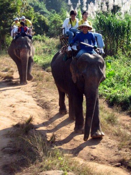 elefante baja blog