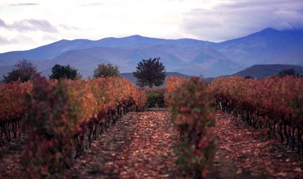 viñedos vivanco