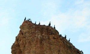 Algarve pájaros roca