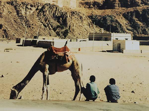 Jordania wadi rum camello