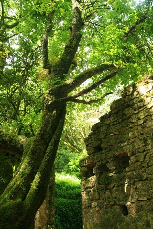 Sintra parque castillo musgo