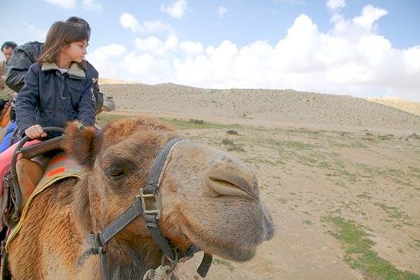 camello desierto baja blog