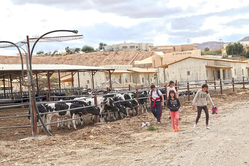 Zona ganadera de Yotvata