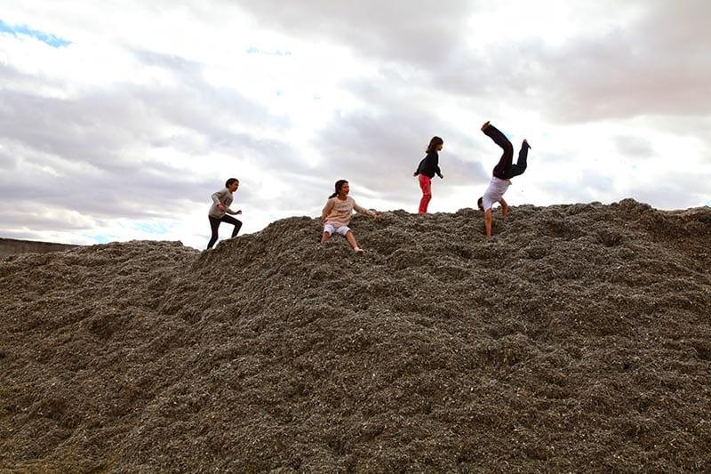 kibbutz semillas saltos blog