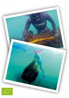 Portomuiños trabaja la experiencia de recoger algas