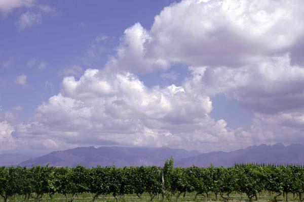 La codilera de los Ándes, siempre presente en Mendoza