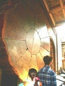 Las secuoyas son los seres vivos más grandes que habitan en la tierra