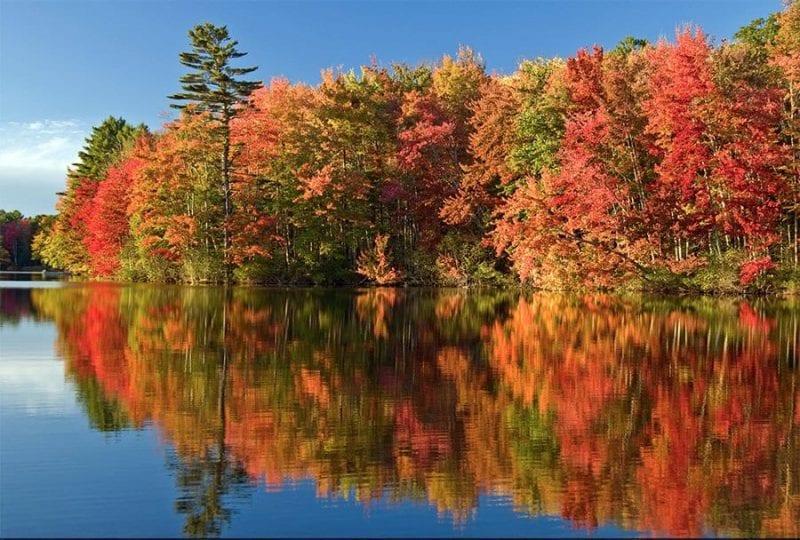 otoño colores maine