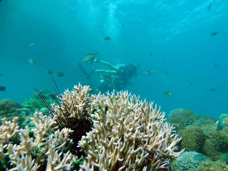 Bucear en el Mar Rojo es una de las muchas actividades que se pueden hacer el Eilat