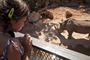 Una niña observa un rinoceronte en el BIOPARC