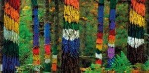 El bosque de Oma se ubica en la reserva de la Biosfera de Urdaibai en Vizcaya