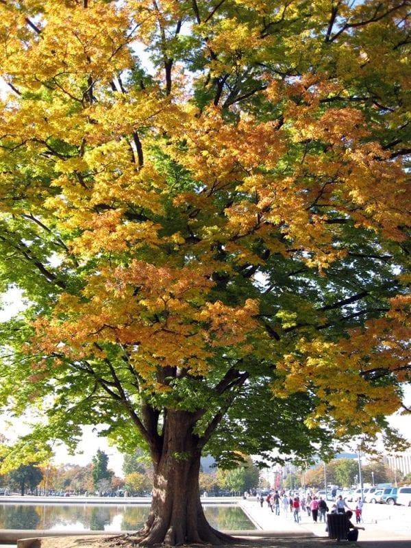 La abundancia de árboles en Washington aconseja la visita en otoño o primavera