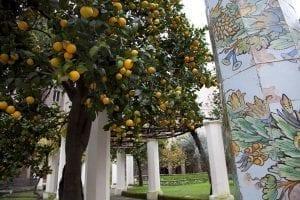 El claustro de santa Clara está lleno de naranjos