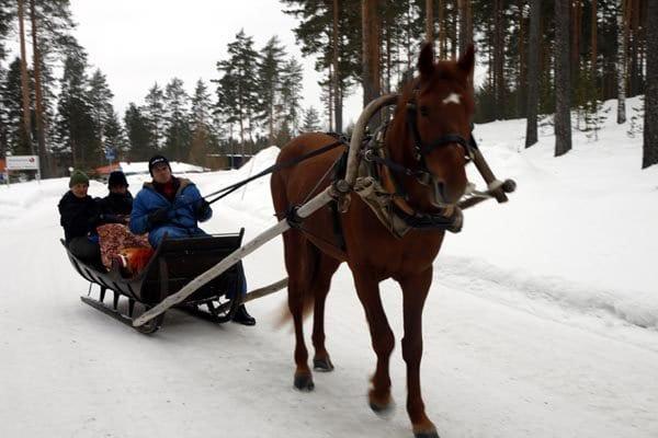 Los trineos tirados por caballo o perros tienen plazas para varias personas