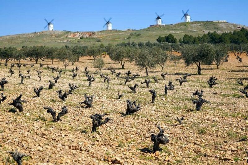 Conjunto de molinos de viento en Alcazar de San Juan