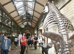 En el museo de Historia Natural se exhiben grandes dinosaurios