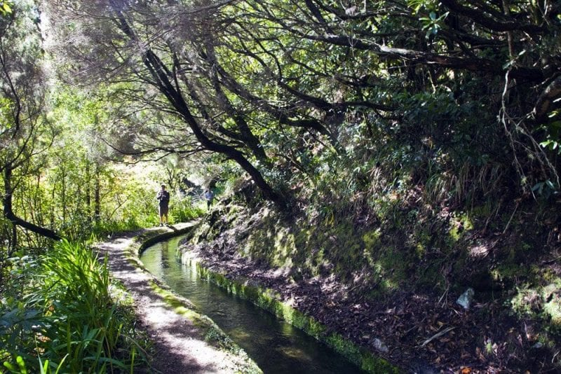 El bosque de laurisilva de Madeira está protegido