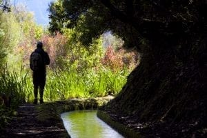 Los paseos por levadas, imprescindibles en Madeira