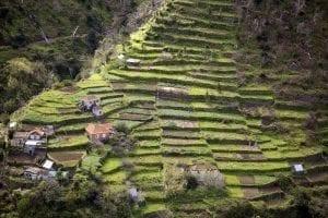 Cultivos escalonados en Madeira