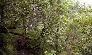 Madeira es una isla rica en árboles