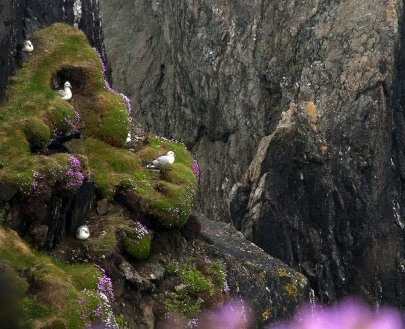 Los pájaros hacen nidos en los acantilados