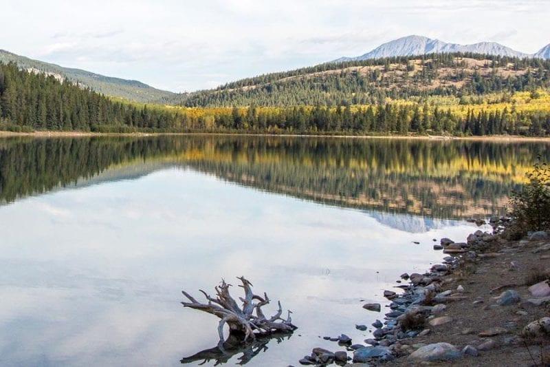En Jasper hay millones de árboles
