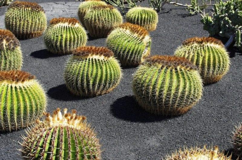El horario del jardín de cactus: de 10 a 17:45