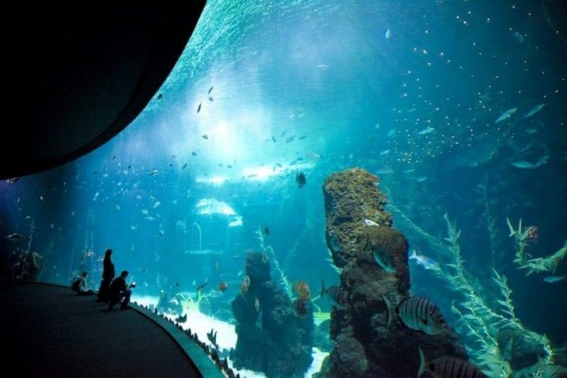 La piscina acuario más grande del mundo