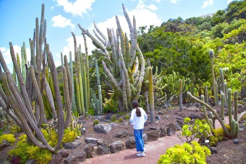 En el jardín botánico hay más de 2.000 cáctus