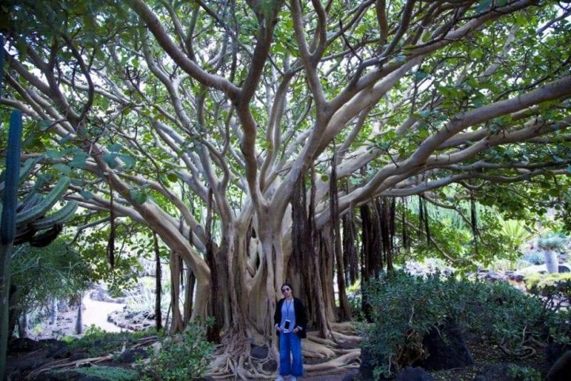Detalle de un árbol del Jardín Canario