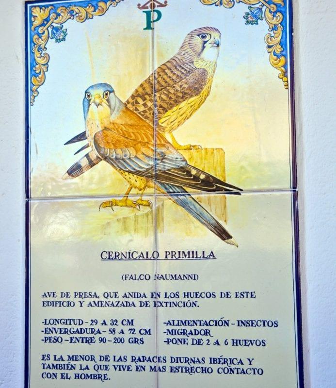 Información sobre los cernícalos en el parador de Oropesa